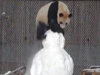 В Сети показали, как панда со снеговиком боролась