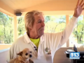 Американский пенсионер побил медведя ради чихуахуа