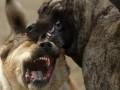 В Харьковской области бешеные животные покусали 85 человек - СЭС