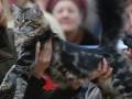 Россиянин получил сотрясение мозга после того, как на него упал 12-килограммовый кот