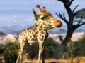 Животные без шеи покоряют интернет (ФОТО)