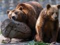 На Сахалине медведь загрыз пенсионерку на дачном участке