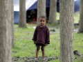 В Индии за полдня высадили рекордные 66 миллионов деревьев