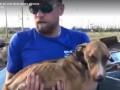 Живого щенка нашли под завалами спустя месяц после урагана Дориан на Багамах