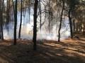 Депутаты усилили наказание за поджог леса