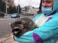 В Харькове на митинг против карантина вышел енот
