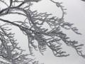 Синоптики дали прогноз на январь