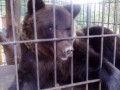 На Прикарпатье медведь напал на женщину