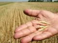 Сингапурская компания планирует построить в Украине зернохранилища
