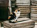 Киевсовет обязал пускать бездомных котов в подвалы и запретил отлов