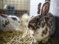 В Украине запретили испытания косметики на животных