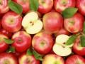 Украина рекордно нарастила экспорт яблок