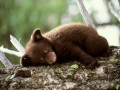 Дешевая неволя: Медвежонок за 1300 гривен, а лев за полторы