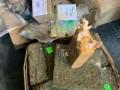В Одессе уничтожили наркотиков на 100 миллионов долларов