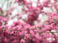 Сухо, но с заморозками: синоптики рассказали о погоде 21 марта