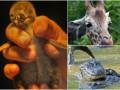 Животные недели: крошка-пингвин, умелый жираф и коварные крокодилы
