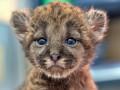 Животные недели: Флоридский котенок и киевская носуха