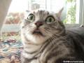 Смешные животные: Коты, которые не могут скрыть свой страх (ФОТО)