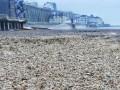 На берег Великобритании выбросило десятки тысяч морских звезд