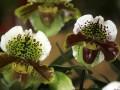 В Киеве пройдет выставка экзотических растений
