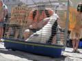 Протестующие принесли во Львовский горсовет скунса