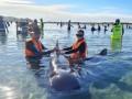 В Новой Зеландии на отмель выбросились около 50 дельфинов