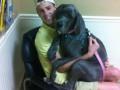 Милые и беззащитные: животные на приеме у ветеринара