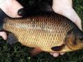 Экологи не рекомендуют употреблять рыбу из столичных водоемов