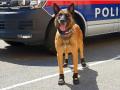 В Австрии из-за жары полицейским собакам выдали спецботиночки