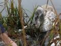 В Виннице вытащили из ледяной воды лебедя