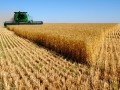 Украинская пшеница заменит российскую на рынке - США