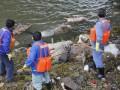 В Шанхае из реки выловили более двух тысяч мертвых свиней