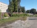 В Запорожской области ветка оборвала электропровод и убила пенсионерку