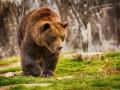 На Камчатке 70 голодных медведей заблокировали туристический маршрут