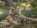 Животные недели: джакузи с тигром и рыбалка с гепардом