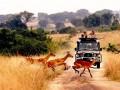 В Уганде похитили туристку из США