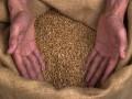 Украина уменьшила экспорт зерна, рынки нервничают