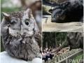 Животные недели: слон на обеде, одноглазый совенок и забывчивый мишка