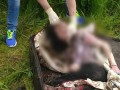 В Ивано-Франковской области в чемодане нашли тело болгарской студентки