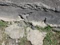 Из-под школы в Киргизии вытащили два десятка змей