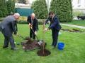 Депутаты возле Рады посадили яблоню