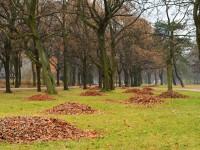 В Киеве построят комплекс по утилизации опавших листьев
