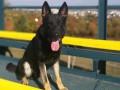 В Словакии полицейский пес поймал двух украинских контрабандистов