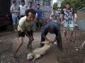 В Китае требуют запретить фестиваль поедания собак