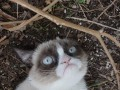 Сердитый кот стал главным мемом года (ФОТО)