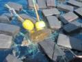 Моряки спасли черепаху, которая застряла в 800 кг кокаина