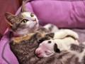 День в фото: Кошка-нянька, свадьба понарошку и битва за Фарион