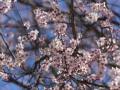 В Украину идет потепление: Ночные морозы прекратятся с 11 апреля