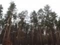 В киевских Бортничах нашли труп неизвестной женщины
