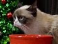 Главные ВИДЕО дня: Рождественские котики и уход Януковича от журналистов
